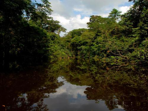 AMAZONAS REGENWALD LODGE, ECUADOR: the Imuyo River is the clearest black water river in the Amazon of Ecuador.