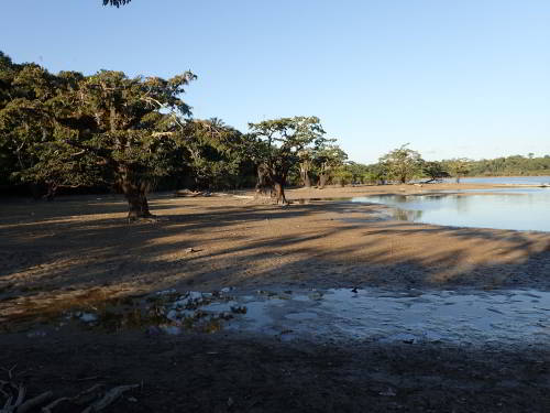 CLIMATE IN THE AMAZON RAINFOREST OF ECUADOR: Cuyabeno Lake during the dry season.