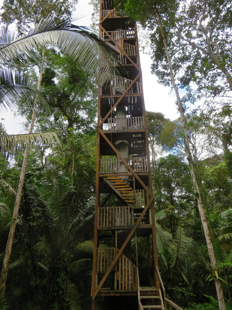 COFAN LODGE OF INDIGENOUS COFANS OF ECUADOR [7 DAYS ITINERARY]: Canopy tower, Cuyabeno.