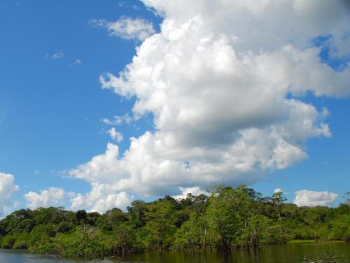 BEST CUYABENO TOURS: extended swamps characterize the forest.