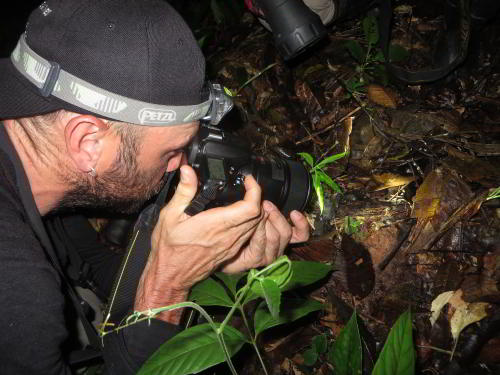REGENWALD, ECUADOR REISEN: Jungle photography at Cuyabeno Amazon Jungle Lodge, Ecuador visit