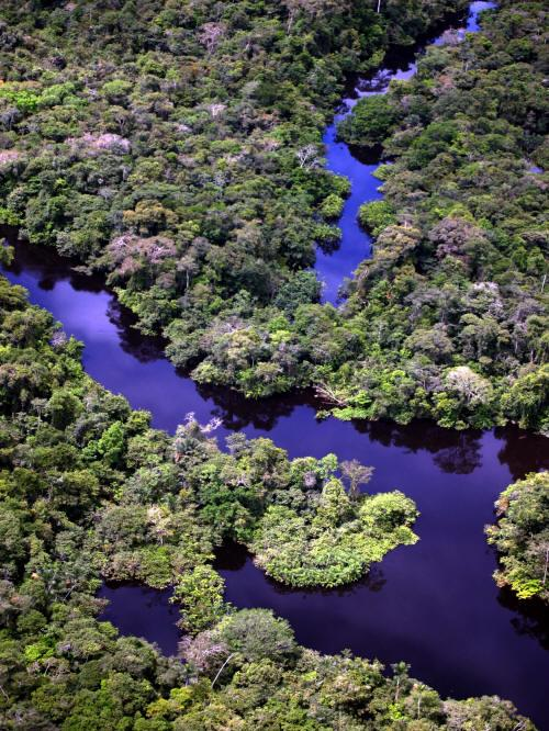 BEST CUYABENO TOURS: Lagarto Cocha along the Peruvian border is a huge swamp area.