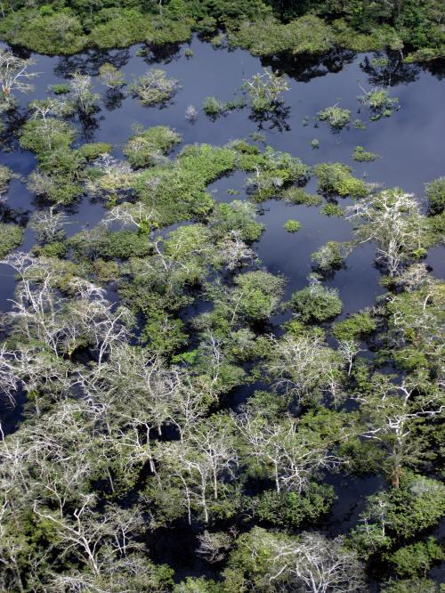 BEST CUYABENO TOURS: The border of the Cuyabeno Wildlife Reserve is a huge swamp area.