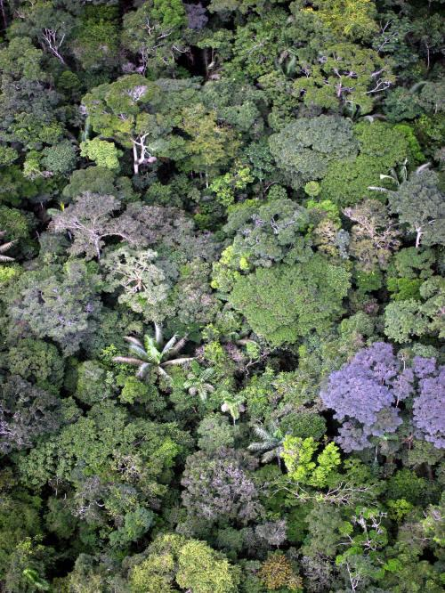BEST CUYABENO TOURS: Amazon jungle seen from the air.