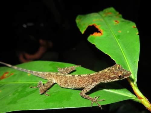 BEST CUYABENO TOURS: Interesting lizard in the jungle